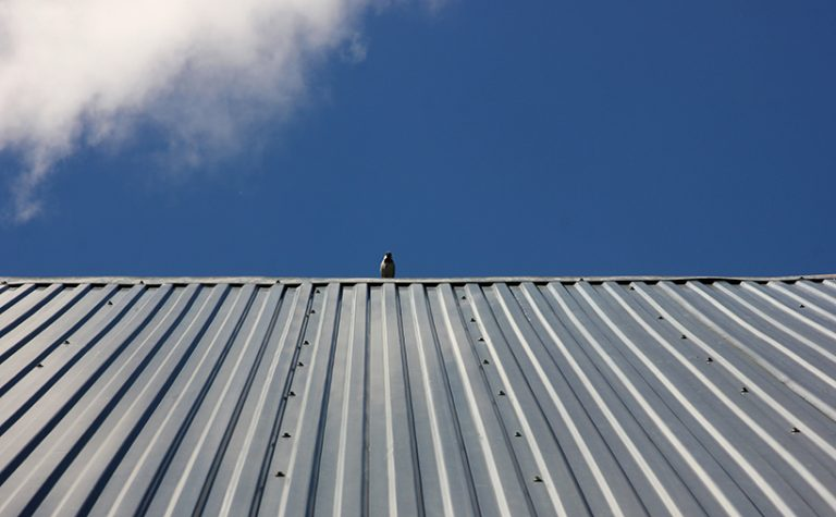 Metal Cladding With Bird Sat on Roof